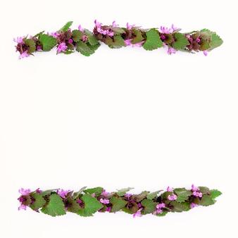Strisce isolate di piante di campo primaverile con fiori rosa su sfondo bianco Foto Premium