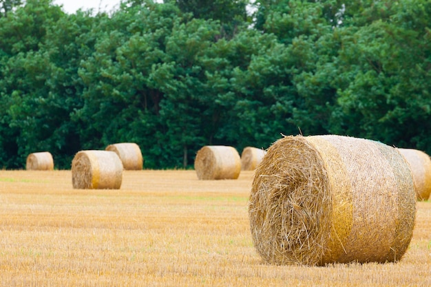 Panorama della campagna italiana. rotoballe sul campo di grano. agricoltura, vita rurale