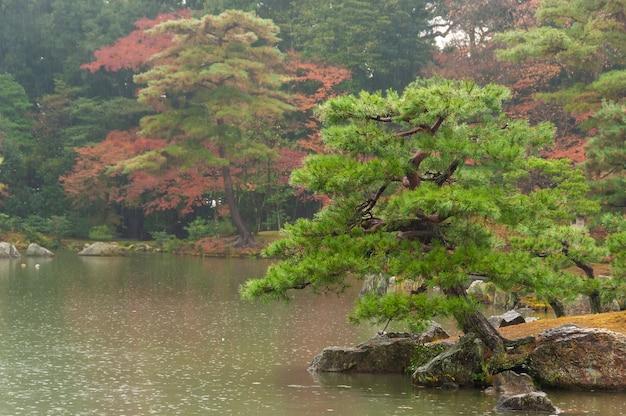 Giardino giapponese nei giorni di pioggia, albero verde, lago, sfondo di alberi autunnali.