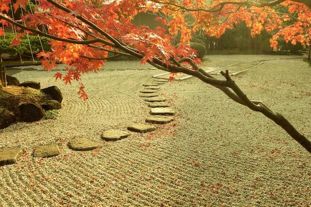 Giardino zen giapponese entro l'autunno con albero di acero rosso in primo piano