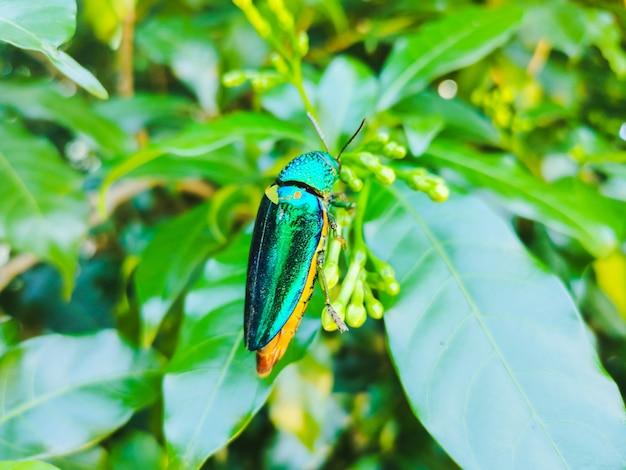 Scarabeo gioiello su foglia verde