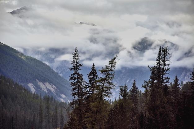 Viaggio a piedi attraverso le valli montane. la bellezza della fauna selvatica. altai, la strada per i laghi shavlinsky.