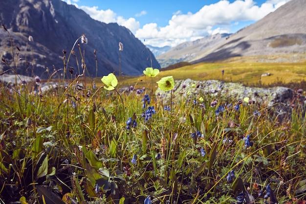 Viaggio a piedi attraverso le valli montane