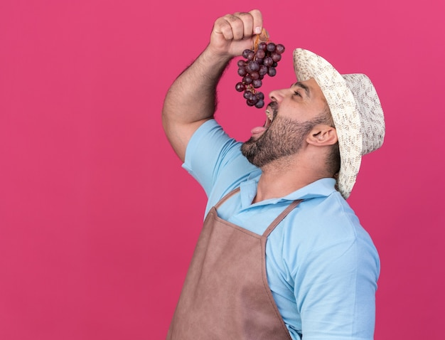 Giardiniere maschio caucasico adulto gioioso che indossa cappello da giardinaggio che mangia grappolo d'uva