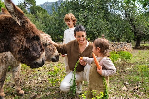 Madre e bambini etnici allegri che accarezzano simpatici asini in terreni agricoli