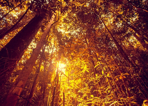 Alberi tropicali della foresta della giungla in asia bellissimo sfondo del paesaggio della natura di avventura in pioggia profonda