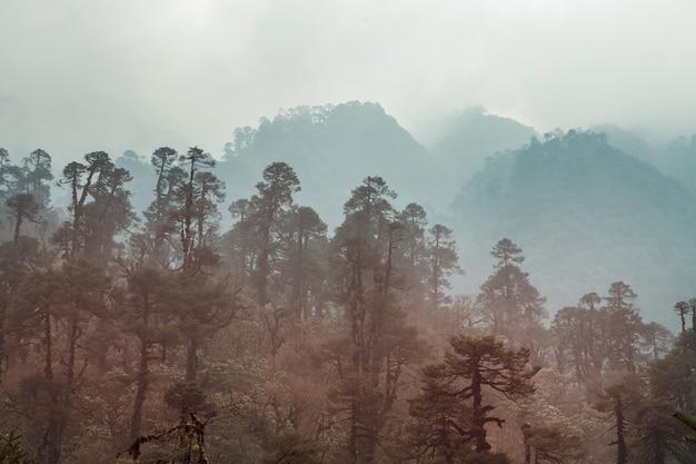 Giungla nelle montagne dell'himalaya, nepal