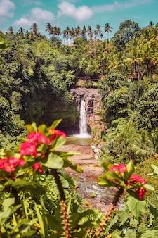 Cascata nella giungla tra piante e fiori tropicali sull'isola di bali in indonesia