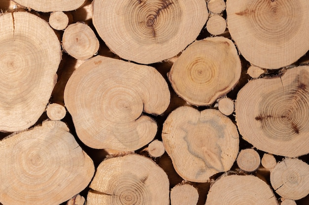 I ceppi di albero di ginepro hanno incollato insieme il colpo del primo piano.