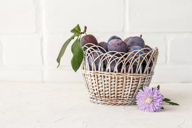 Prugne mature appena raccolte in un canestro di vimini con un fiore dell'aster sui precedenti bianchi. frutti appena raccolti.