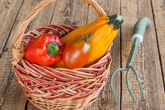 Zucca appena raccolta, pomodori e peperoni in un cesto di vimini e rastrello a mano su vecchie tavole di legno. verdure appena raccolte. vista dall'alto.