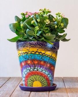 Kalanchoe, il brivido della vedova nel vaso astratto dipinto a mano