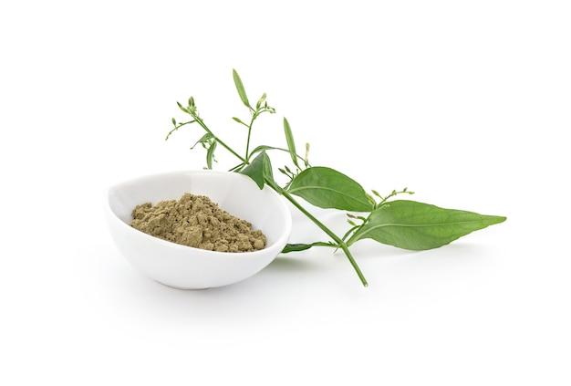 Kariyat o andrographis paniculata, foglie verdi del ramo e polvere isolata su bianco