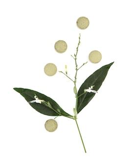 Kariyat o andrographis paniculata, ramo di foglie verdi e tablet isolato su bianco.vista dall'alto, piatto laici.
