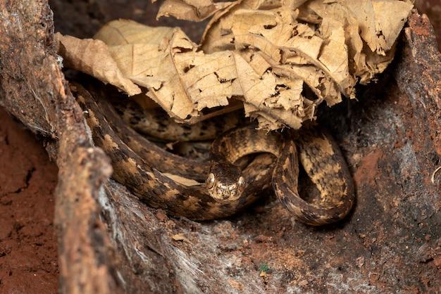 Serpente di lumaca con la chiglia sul piede dell'albero