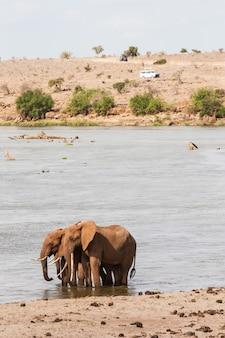 Kenya, parco nazionale orientale di tsavo. due elefanti con un veicolo turistico sullo sfondo