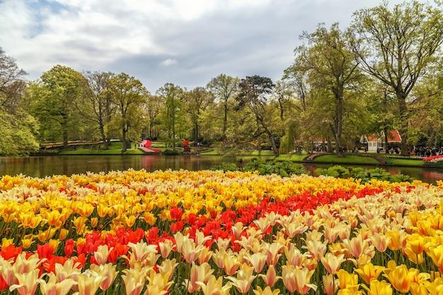 Giardini keukenhof con bellissimi fiori primaverili keukenhofin paesi bassi