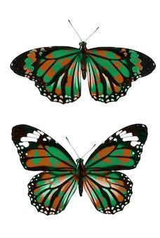 Farfalla militare cachi. isolato su sfondo bianco