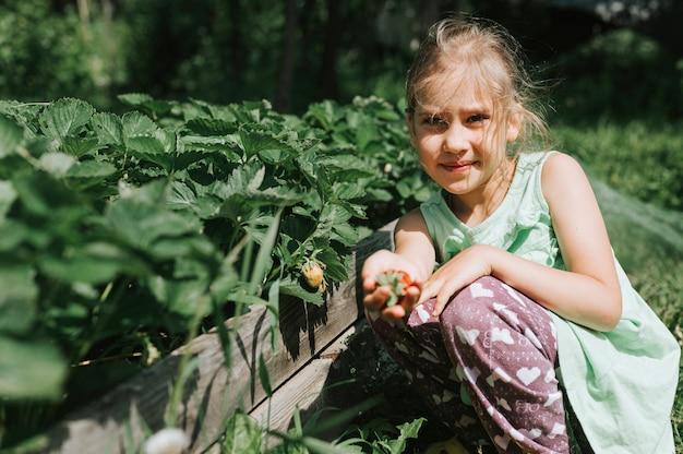 Ragazza del bambino che raccoglie fragole mature nella stagione estiva in fattoria biologica di fragole.