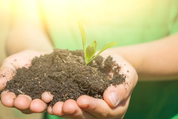 Le mani dei bambini tengono il terreno con le piantine di piante. giornata della terra dell'ambiente. salva il pianeta e il nuovo concetto di vita. bambino che si prende cura della giovane foglia del germoglio della pianta verde, retroilluminazione
