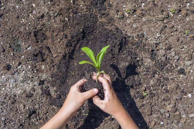 Mani dei bambini che piantano la piantina nel terreno. giornata della terra dell'ambiente. salva il concetto di pianeta. bambino che si prende cura del giovane albero a terra.