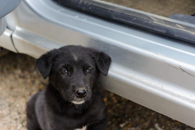 Un cucciolo gentile, carino, piccolo, affamato, povero, abbandonato, senzatetto, vuole mangiare e trovare un padrone. il concetto di protezione degli animali randagi. l'interazione tra uomo e animali.