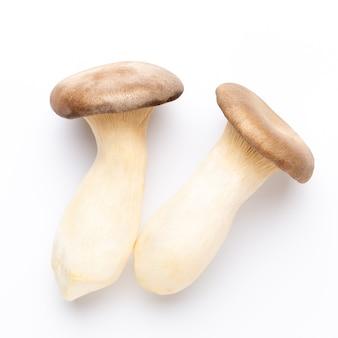 Fungo di ostrica reale. fungo eryngii, su superficie bianca.