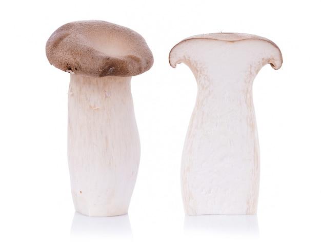 Fungo di ostrica reale pleurotus eryngii su bianco