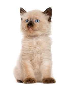 Gattino davanti al muro bianco