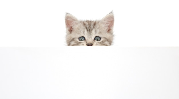 Gattino che pende su un cartellone bianco, aggiungi il messaggio.