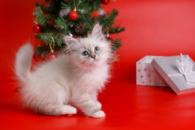 Gattino a casa nel periodo natalizio