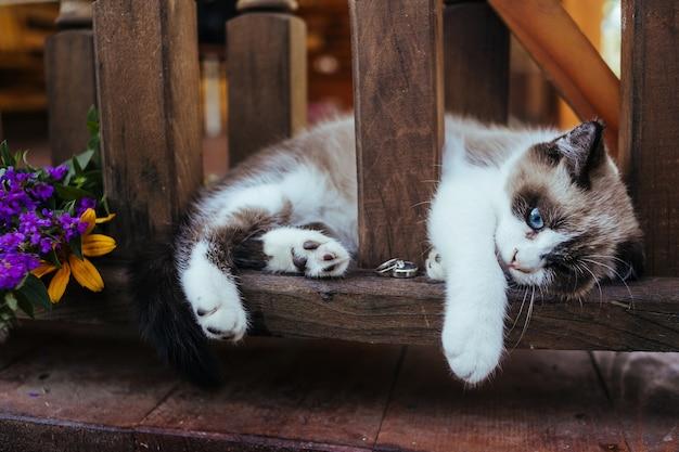 Il gattino giace su una ringhiera in legno marrone con fede nuziale in oro bianco