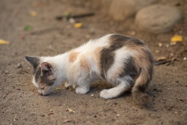 Gattino in cerca di cibo per strada