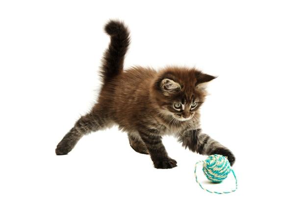 Gattino che gioca contro il fondo bianco