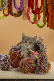 Gattino che gioca con un gomitolo in vari colori
