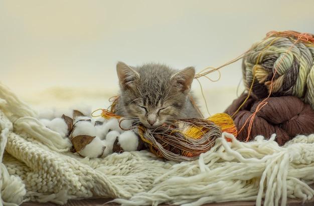 Gattino che riposa su un gomitolo di lana