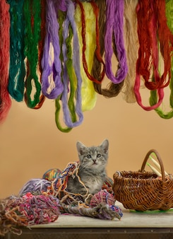 Gattino seduto nel cestino con gomitolo di lana
