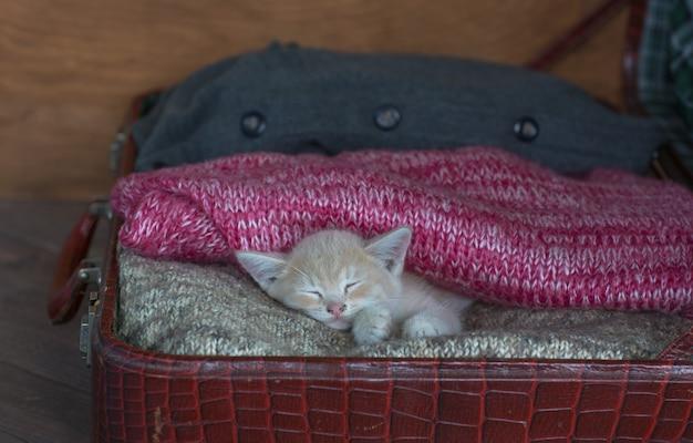 Gattino che dorme su una coperta di lana
