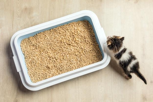 Il gattino usa la lettiera