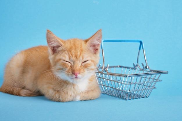 Gattino con un cestino della spesa su sfondo blu. fare la spesa per gli animali. spazio della copia del concetto di negozio di animali