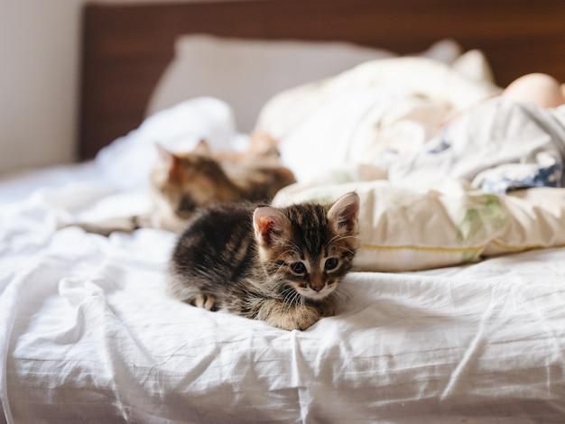 I gattini giacciono su un letto in casa alla luce del sole e su un cuscino bianco