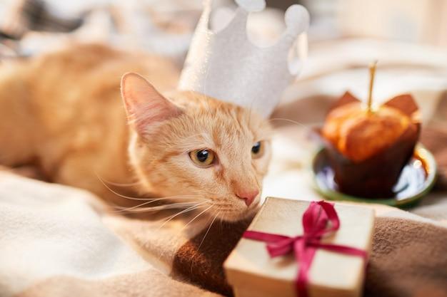 Compleanno del gattino