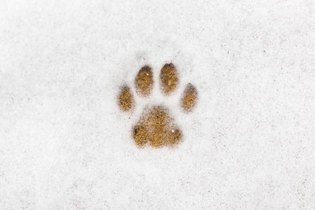 Impronta di gattino nella neve
