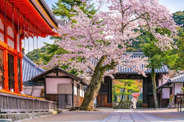 Tempio kiyomizu-dera e stagione primaverile dei fiori di ciliegio (sakura) a kyoto, giappone
