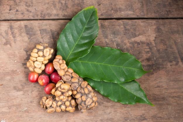 Caffè kopi luwak o zibetto, chicchi di caffè escreti dallo zibetto