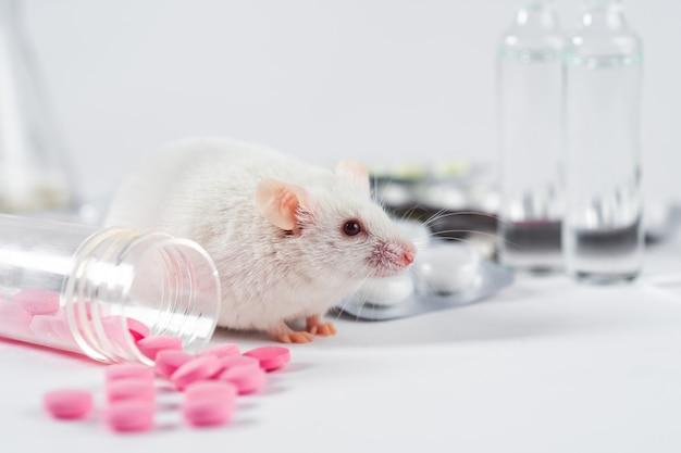 Il ratto di laboratorio si siede su uno sfondo bianco circondato da diverse pillole e fiale