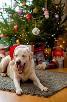 Labrador in un cappello di natale sotto l'albero.
