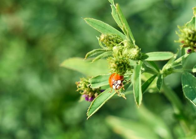 Lady bug seduto su una foglia verde.