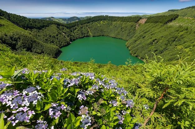 Lagoa de santiago con acqua verde e fiori di ortensia a sao miguel, isole azzorre, portogallo