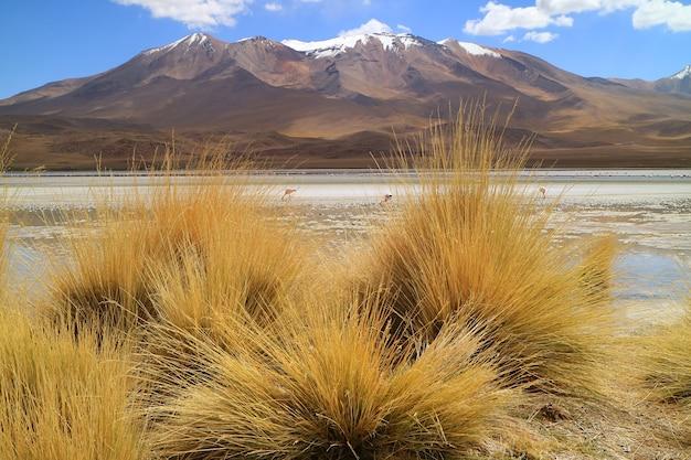 Laguna hediondasaline lago con fenicotteri rosa e stipa ichu erba del deserto in primo piano bolivia